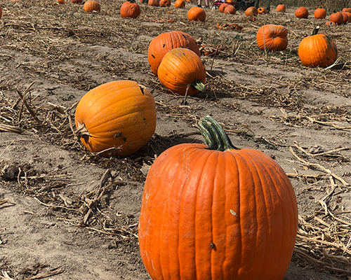 My 6 Favorite Things About Fall